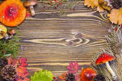 Beau cadre des matériaux naturels, champignons, cônes, feuilles d'automne, agarics de mouche, baies Fond en bois brun d'automne Photographie stock libre de droits