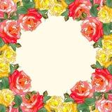 Beau cadre des roses Photographie stock