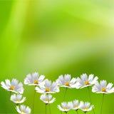Beau cadre floral photo libre de droits