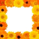 Beau cadre floral de rectangle Photos libres de droits