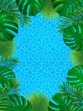 Beau cadre tropical Conception d'été Illustration de vecteur fond exotique d'usines de jungle contexte dans un à la mode illustration stock