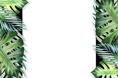 Beau cadre tropical de frontière de feuilles Monstera, paume Peinture d'aquarelle Livre blanc sur le contexte noir illustration libre de droits