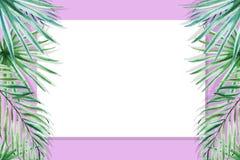 Beau cadre tropical de frontière de feuilles Monstera, paume Peinture d'aquarelle Livre blanc sur le contexte pourpre illustration libre de droits