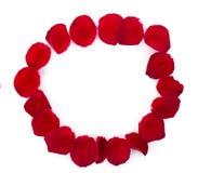 Beau cercle des pétales de rose rouges d'isolement sur le blanc Photographie stock