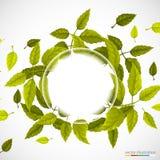 Beau cercle vert des feuilles Photo libre de droits