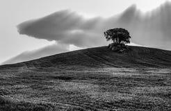 Beau champ agricole avec le soleil, les nuages et l'un arbre sur l'horizon en noir et blanc images stock