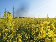 Beau champ avec les fleurs jaunes sur le fond d'une usine m?tallurgique Beau champ avec les fleurs jaunes sur image libre de droits