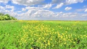 Beau champ d'été avec les fleurs jaunes balançant en vent clips vidéos