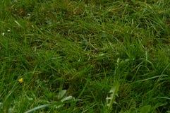 Beau champ d'herbe dense en parc naturel de Gorbeia Paysages de nature d'usines Photographie stock