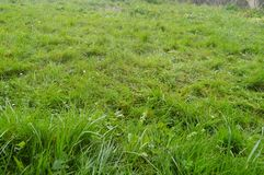 Beau champ d'herbe dense en parc naturel de Gorbeia Paysages de nature d'usines Photo stock