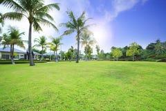 Beau champ d'herbe verte en parc public contre le bleu vibrant photographie stock libre de droits