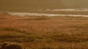 Beau champ de matin avec la couverture de rivière en brume clips vidéos