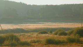 Beau champ de matin avec la couverture de rivière en brume banque de vidéos