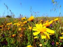 Beau champ des fleurs au Portugal Image stock