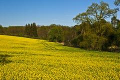 Beau champ des fleurs jaunes Photographie stock