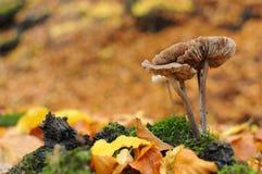 Beau champignon coloré de forêt images stock