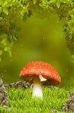 Beau champignon de couche en bois fantastique Photos libres de droits