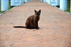 beau chat égaré brun Image libre de droits