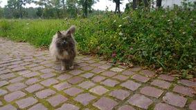 Beau chat égaré pelucheux sur la rue photographie stock