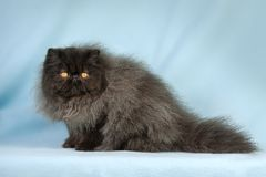 Beau chat Photos stock