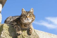 Beau chat photo libre de droits