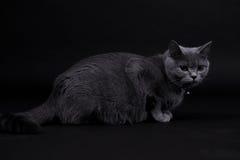 Beau chat Image stock