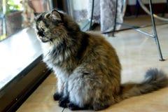 Beau chat photographie stock libre de droits