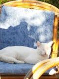 Beau chat Image libre de droits
