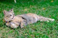 Beau chat adorable de couleur de léopard détendant sur l'herbe image stock