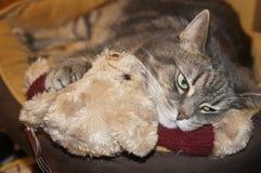 Beau chat britannique gris étreignant l'ours de nounours photo stock