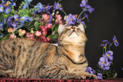 Beau chat brun parmi les fleurs Photographie stock libre de droits