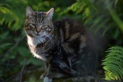 Beau chat d'animal familier Images libres de droits