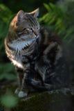 Beau chat d'animal familier Photographie stock libre de droits