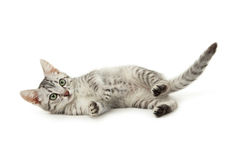 Beau chat d'isolement sur le fond blanc Images stock