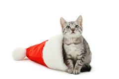 Beau chat dans le chapeau de Noël d'isolement sur le fond blanc Image stock