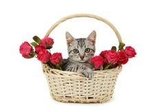 Beau chat dans le panier avec des fleurs d'isolement sur le fond blanc Photographie stock libre de droits