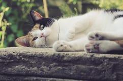 Beau chat de calicot se trouvant sur la pierre image stock