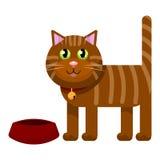 Beau chat domestique dans un collier Photographie stock libre de droits