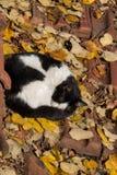 Beau chat en tant qu'animal domestique en vue photos libres de droits