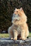 Beau chat fier Images libres de droits