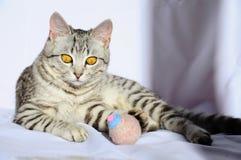 Beau chat gris avec de grands yeux se trouvant sur le plancher photos stock