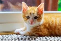 Beau chat jaunâtre domestiqué attendant par la porte Photo libre de droits