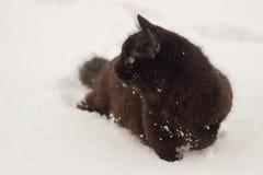 Beau chat noir pelucheux avec les yeux jaunes l'hiver blanc de neige Images stock