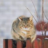Beau chat rayé lumineux de rue se reposant pendant le premier ressort Image stock