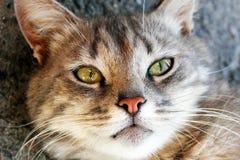 Beau chat regardant l'appareil-photo photographie stock
