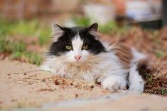 Beau chat repéré photographie stock libre de droits