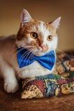 Beau chat rouge avec le noeud papillon Joli portrait de beauté Mensonge sur le sofa Photographie stock libre de droits