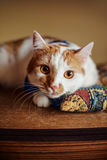 Beau chat rouge se trouvant sur la relaxation douce d'oreiller Photographie stock libre de droits