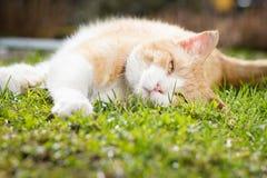 Beau chat rouillé détendant sur le jardin botanique énorme pendant le beau Images stock
