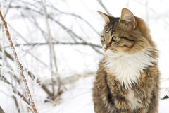 Beau chat se reposant dans la neige Photographie stock libre de droits